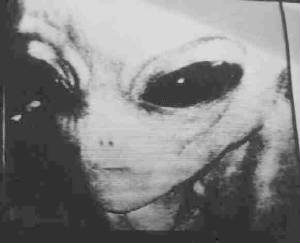 "A real picture of a ""Grey"" alien?"